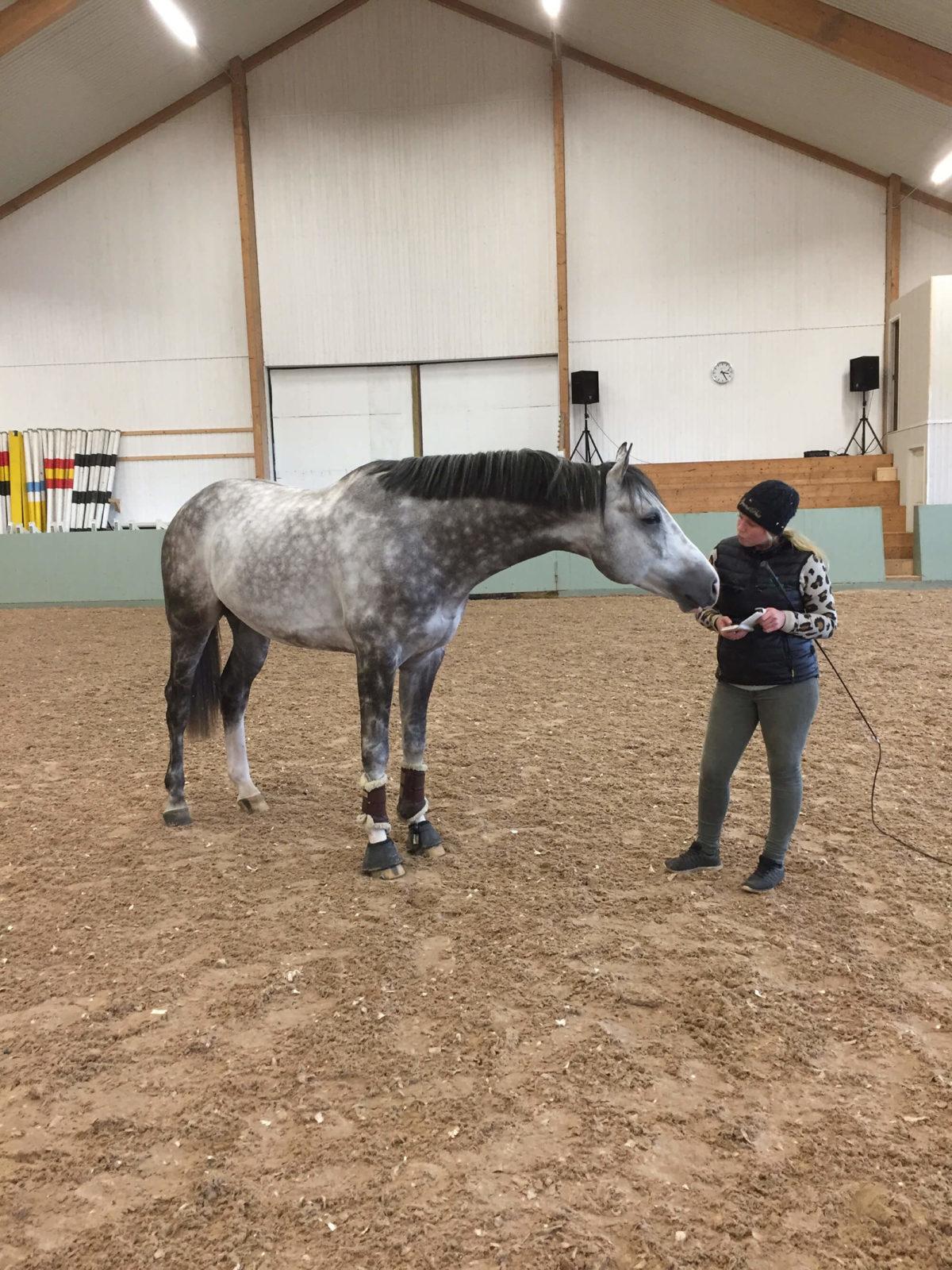 Häst och person på en bana inomhus