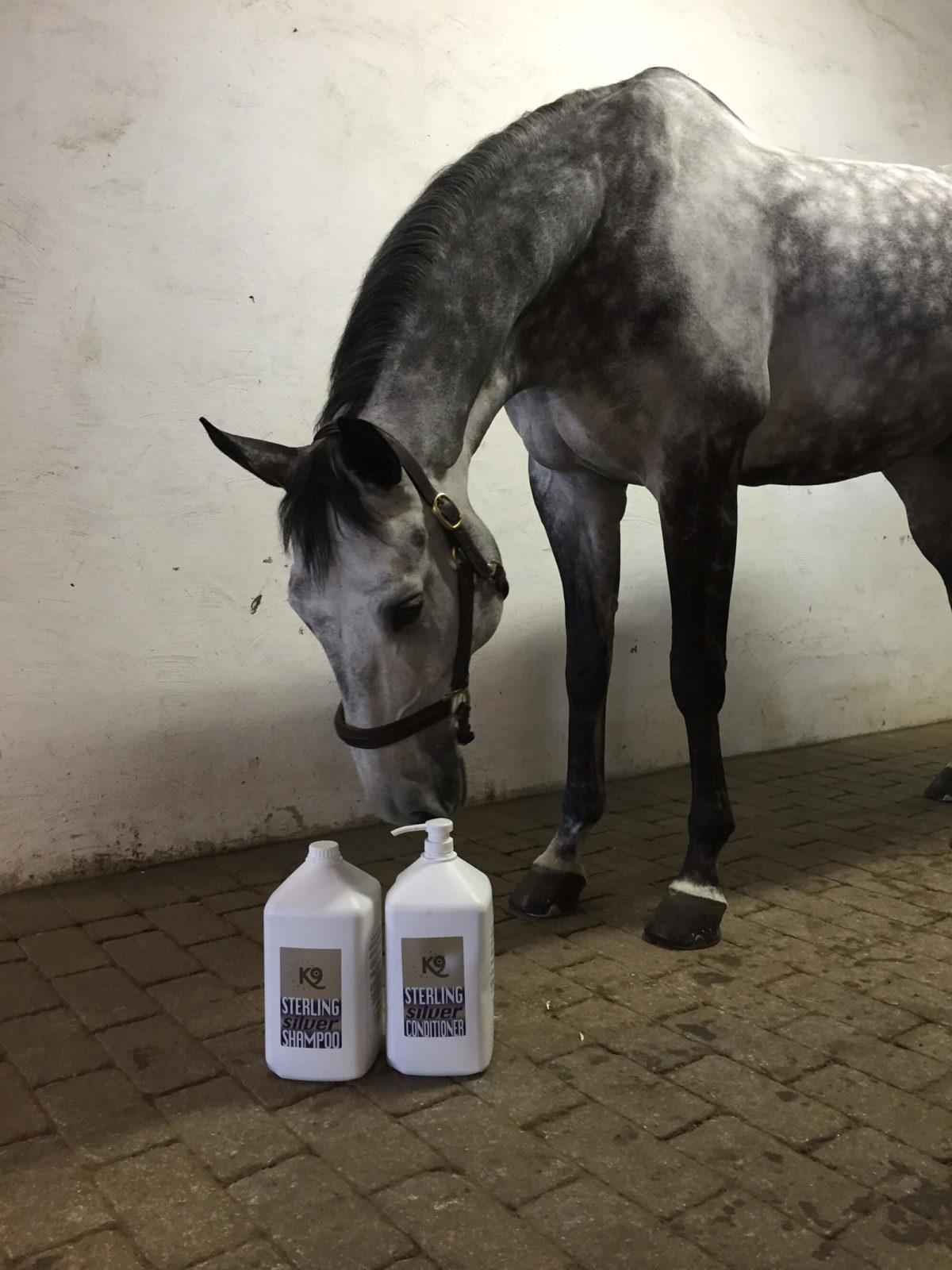 En häst inomhus samt två flaskor Sterling shampoo och balsam