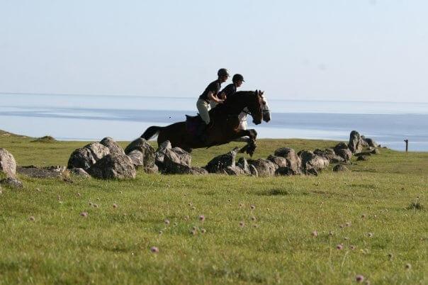 Två hästar hoppar samtidigt över en stenmur på en grässlätt vid havet