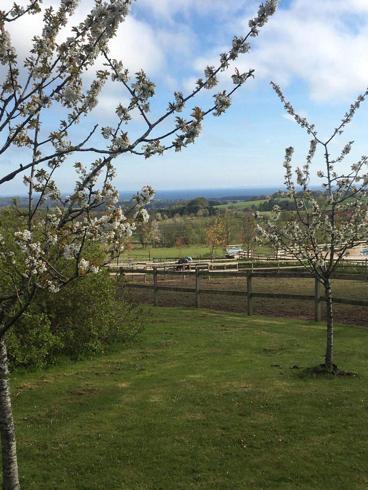 Blommande träd vid Grevlunda gård