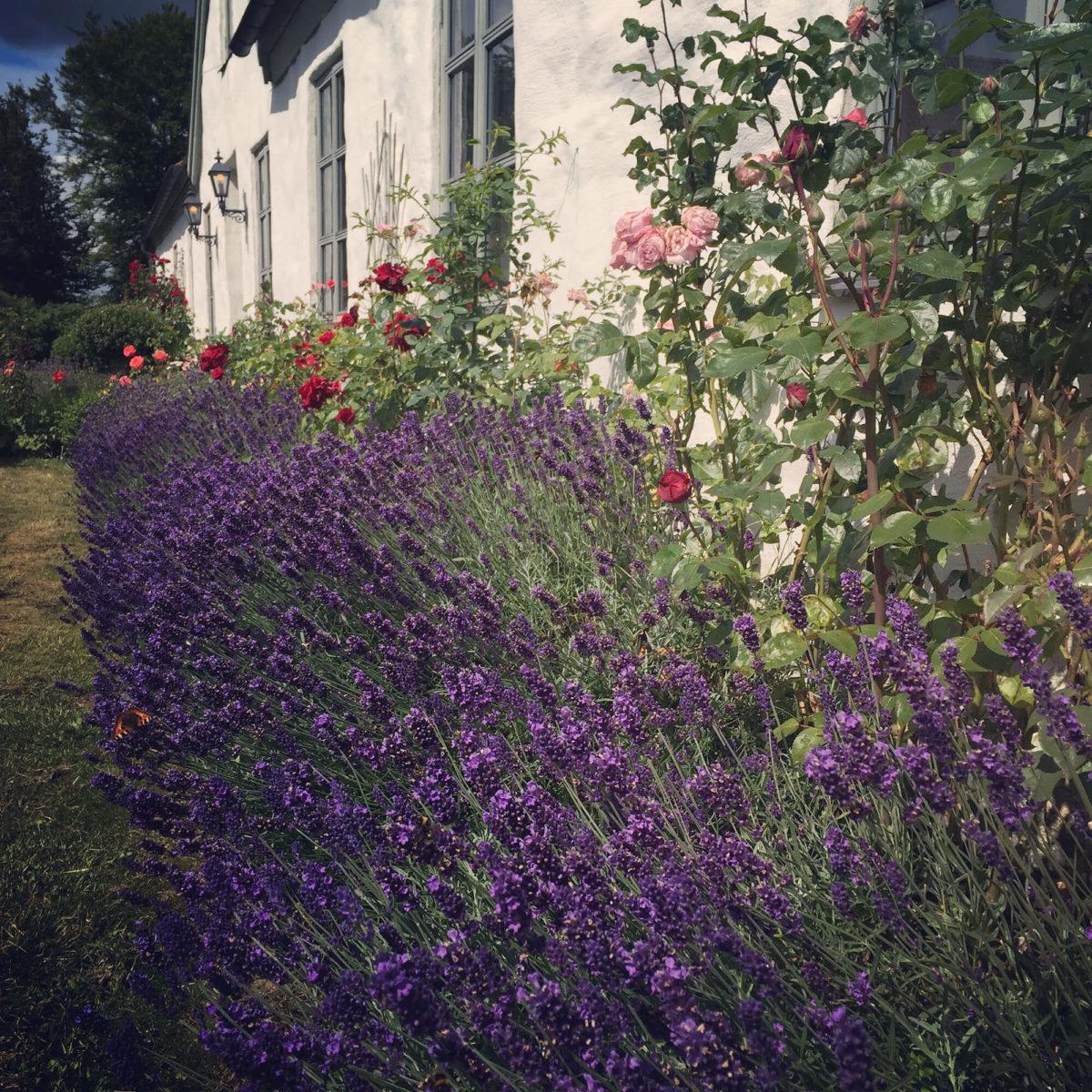 Blomsterrabatten vid ett av husen vid Grevlunda gård