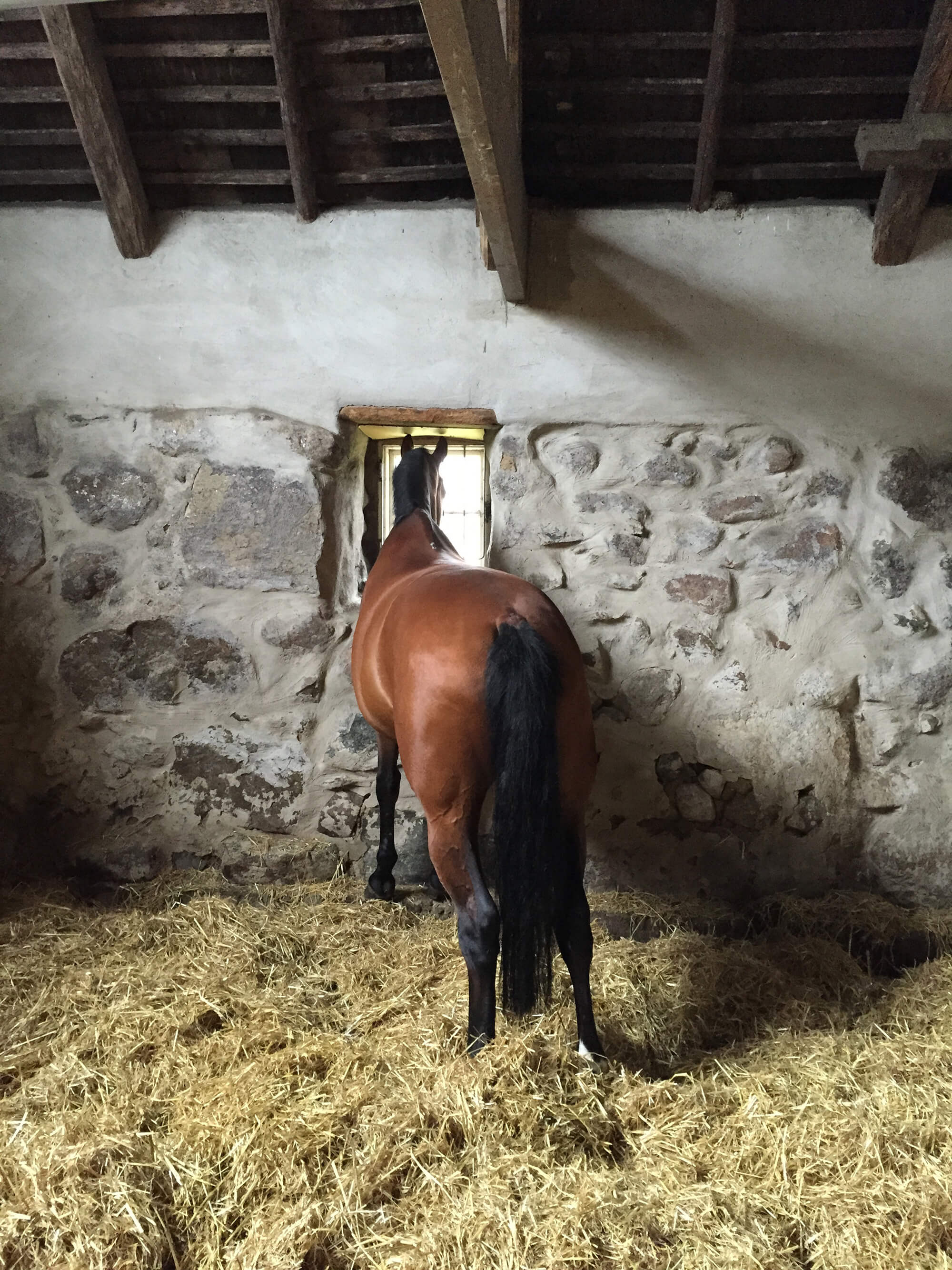 En häst tittar ut genom fönstret i stallet