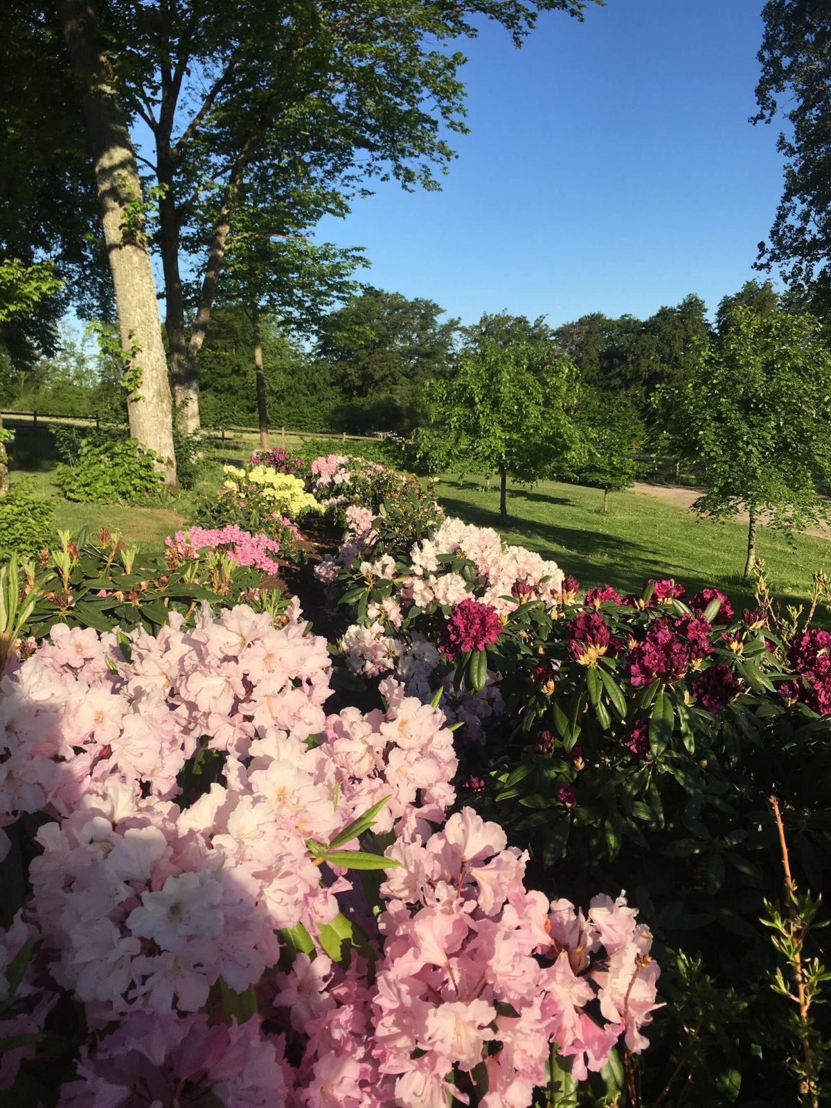 Blommor och träd i trädgården
