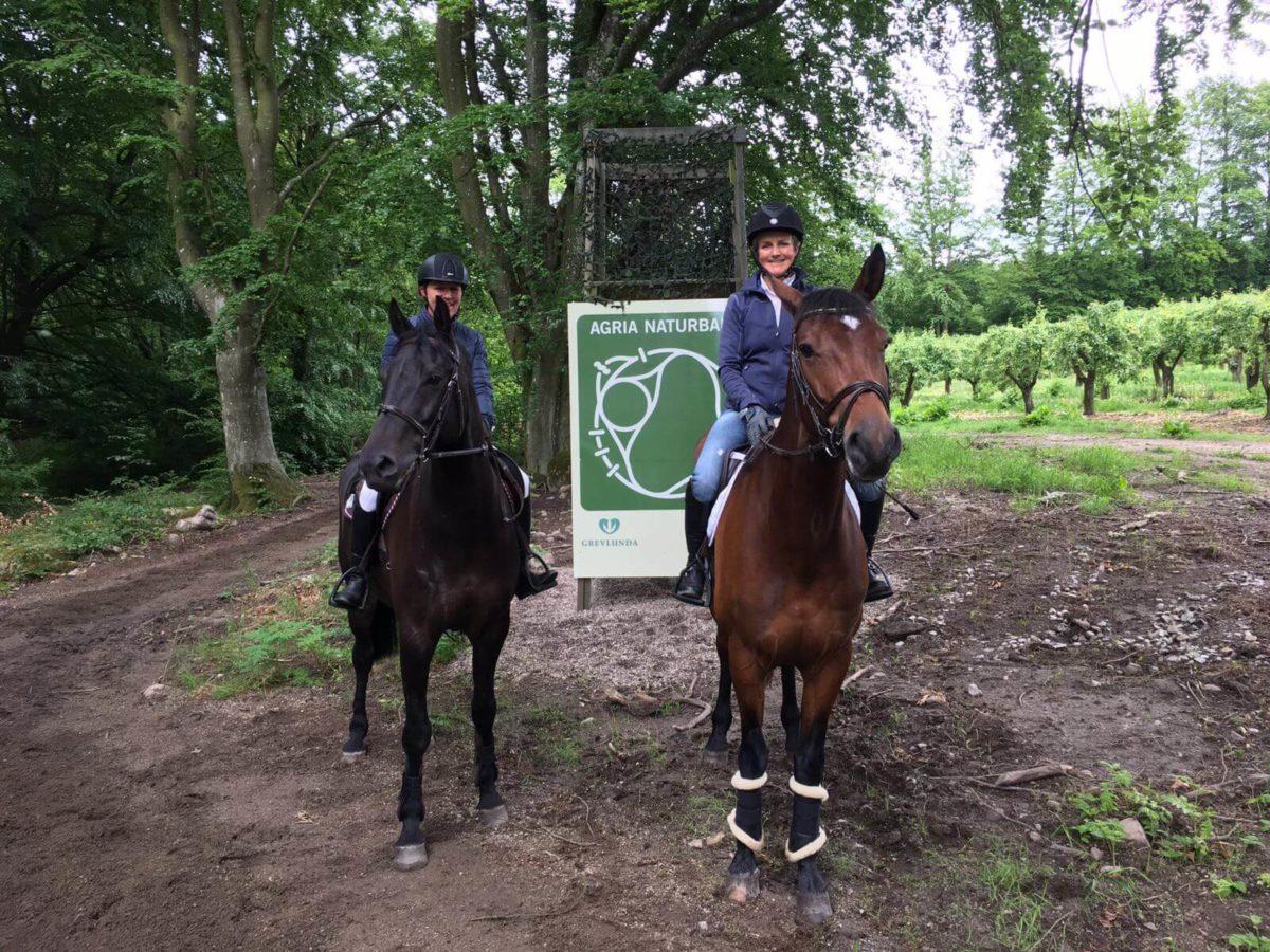 Två personer på hästar i skogen
