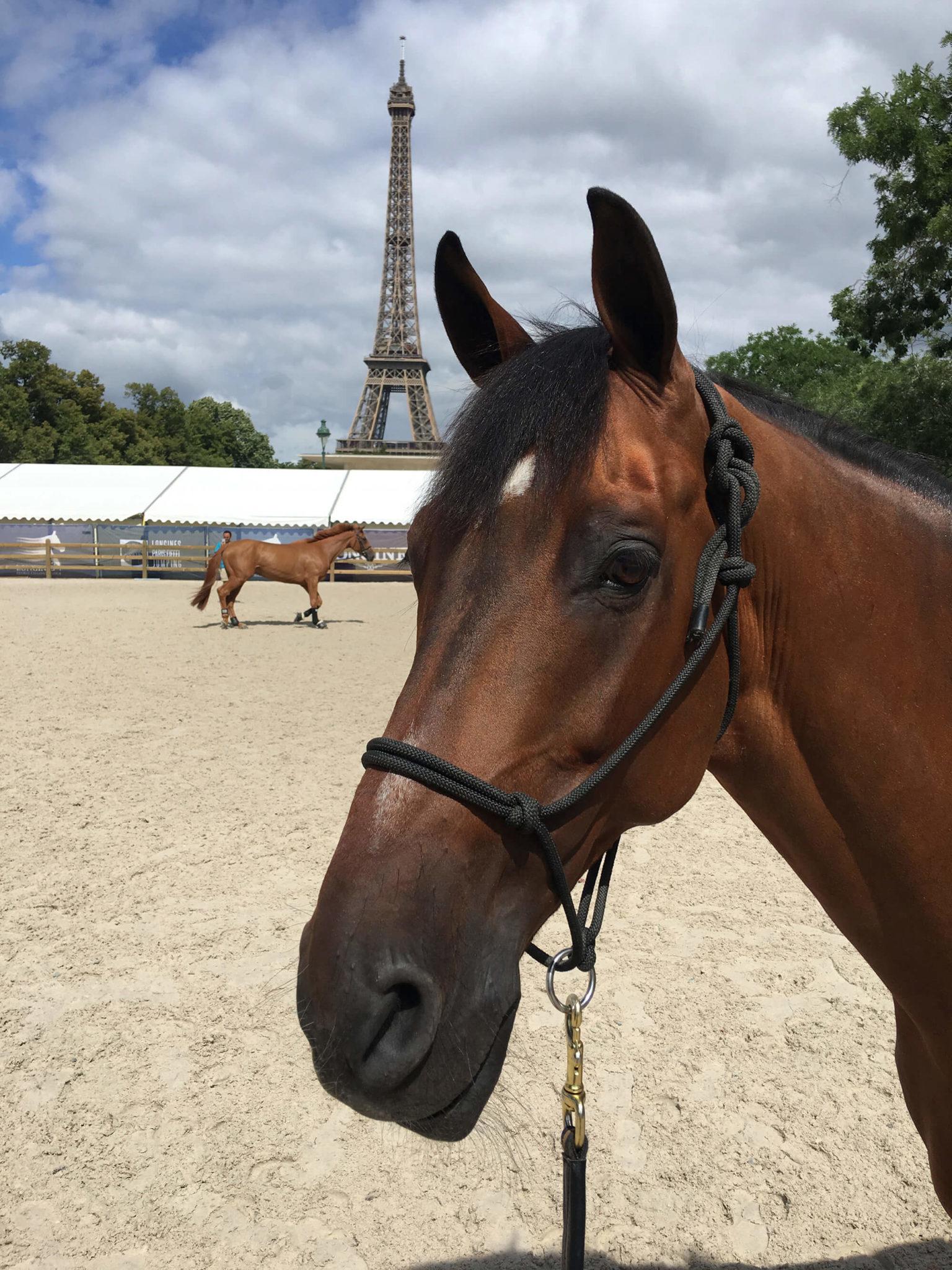 En häst fotas med Eiffeltornet i bakgrunden