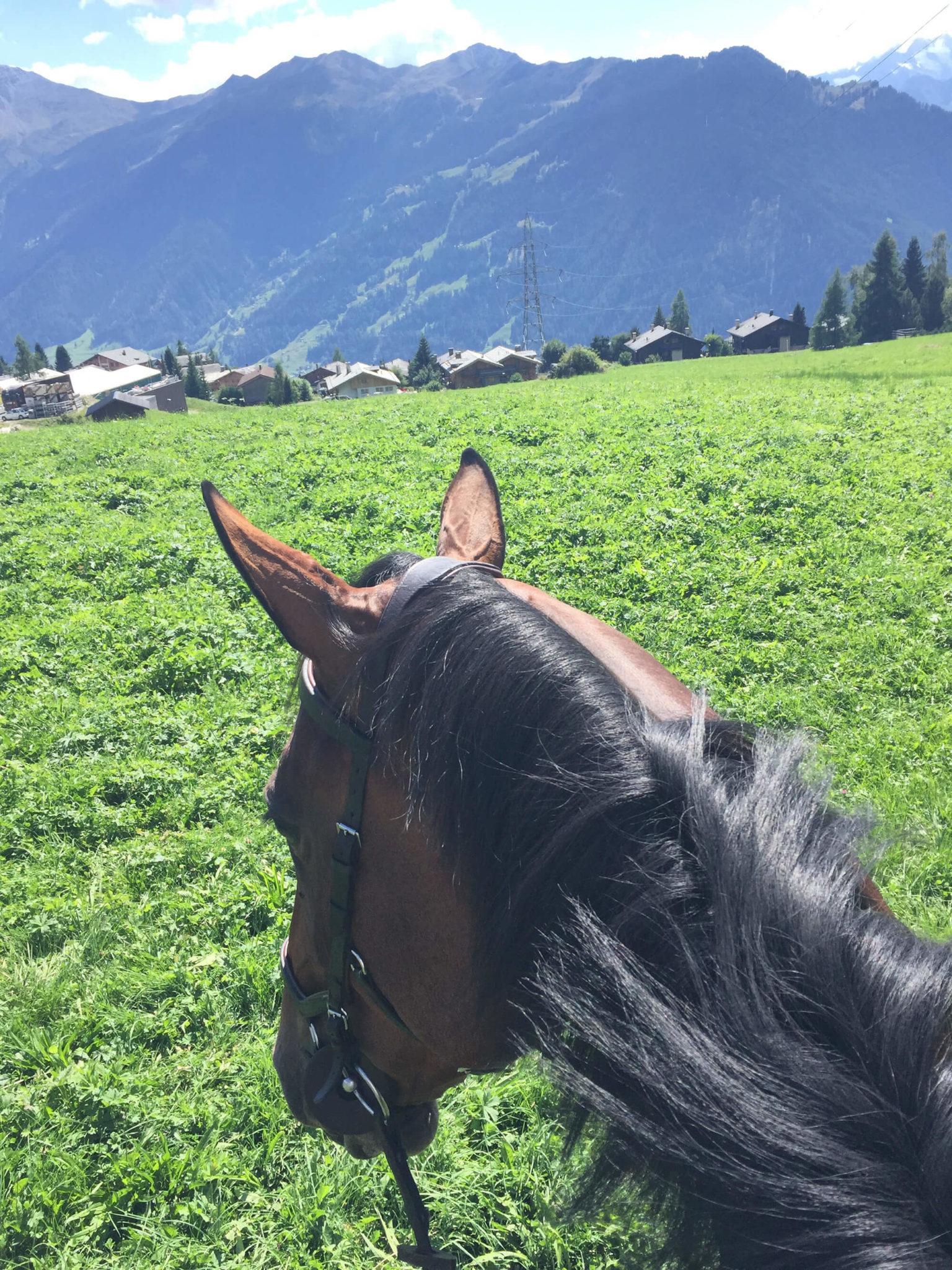 En häst med utsikt över gräs, hus och höga berg