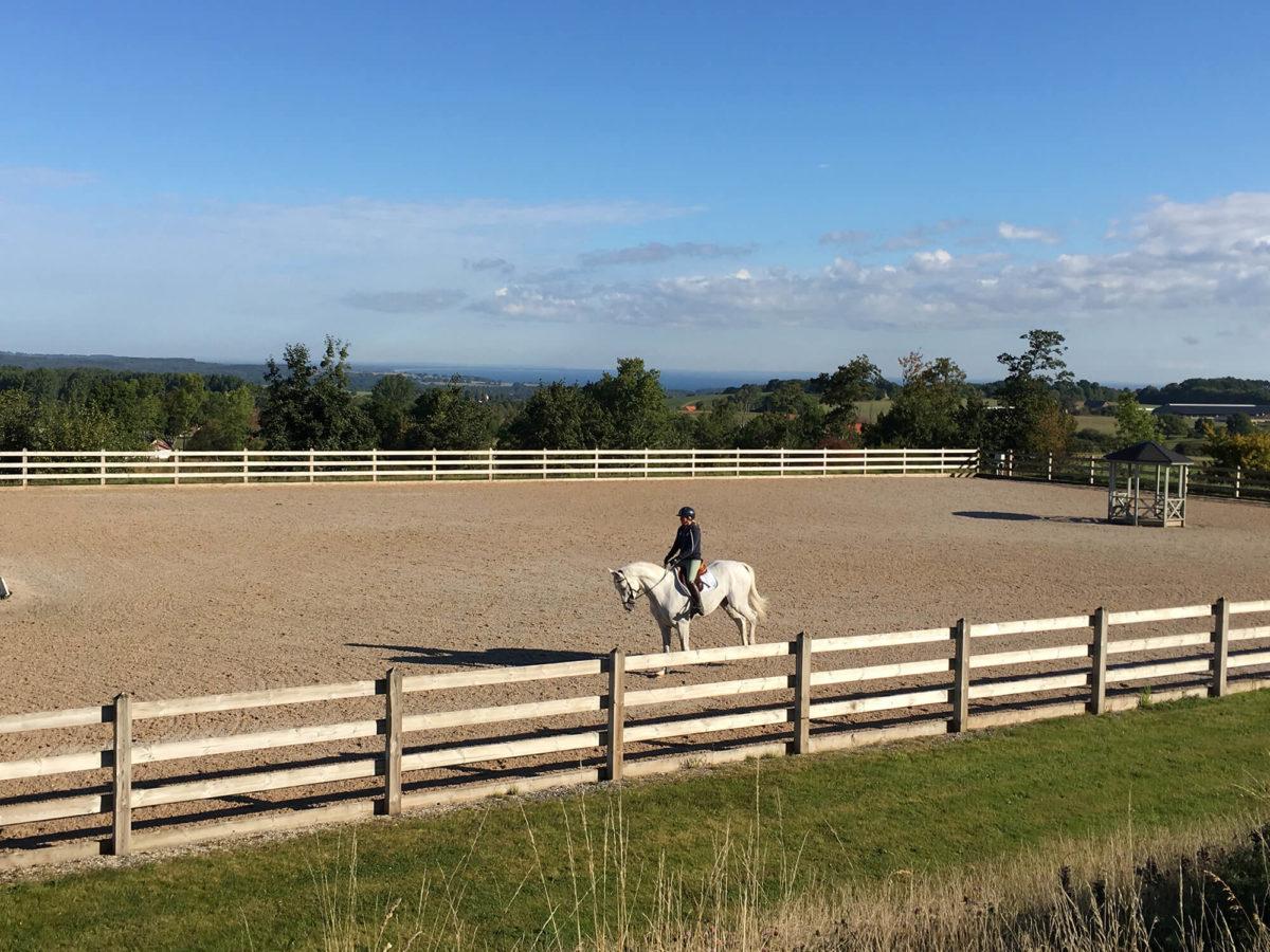 En person och häst är ute på träningsbanan vid Grevlundagården