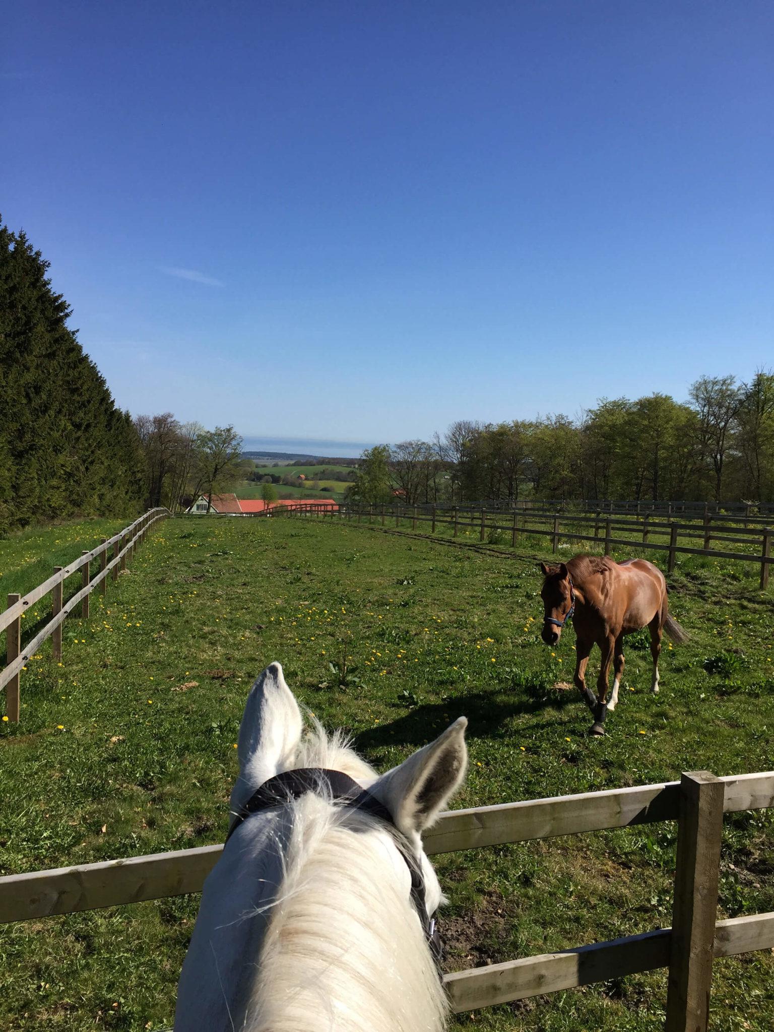Två hästar utomhus i hagen